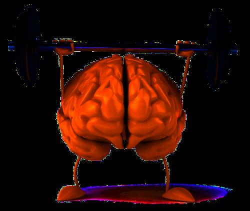 Gehirntraining mit MAT